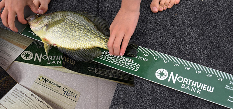 northview bank fish ruler